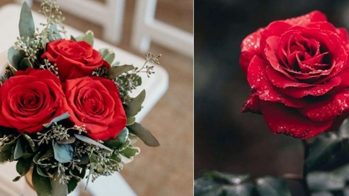 不同顏色的求婚玫瑰代表的花語是什麼呢?